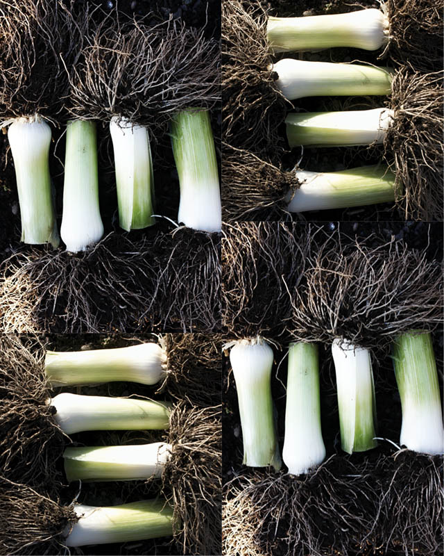 Leeks on display
