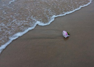 peony left by receding wave