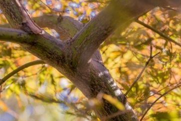 under-cocos-tree-1
